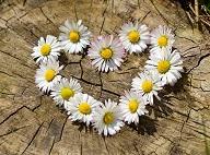 un coeur de fleurs